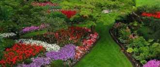 Клумба непрерывного цветения: как создать