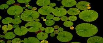 Растения для пруда: виды и названия