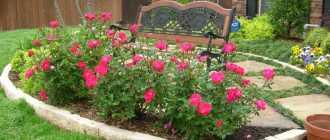 Виды оформления клумб с розами
