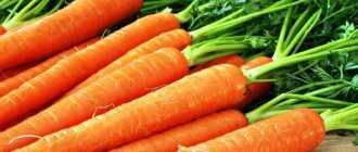 Морковь: лучшие семена