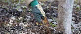 Удобрения осенью: виды