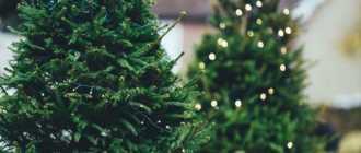 Как выбрать ёлку на новый год