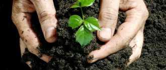 Органические удобрения: внесение